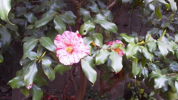 多聞院の草花 3